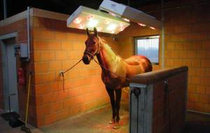 Horse solaria for the health of your horses