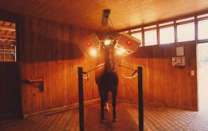 Intensive solar radiation for horses