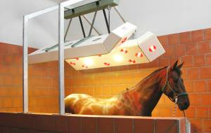 High-quality horse solarium