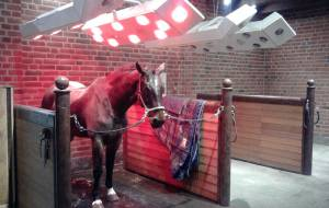 Horse solarium polyester housing