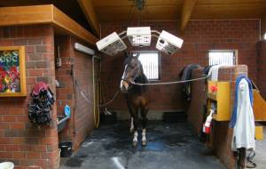 Horse solarium with 3 polyester housings